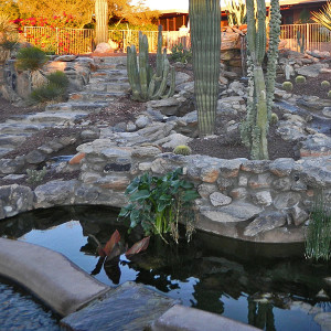 Tucson Koi Pond and Waterfall