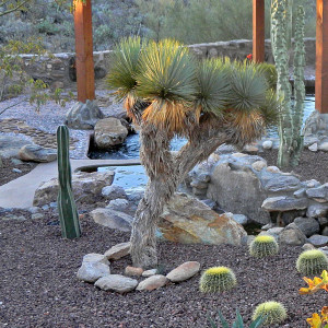 Tucson Rocks, Plants and Cactus Landscaping