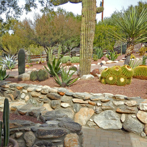 Rock Walls and Tucson Native Cactus