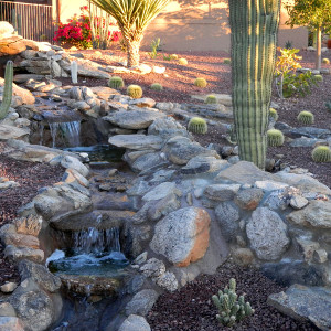 Native Tucson Cactus and Waterfall